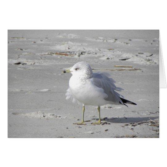 Windblown seagull card