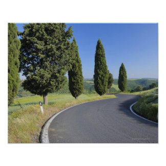 Winding Road Lined with Cypress Trees, Val Poster