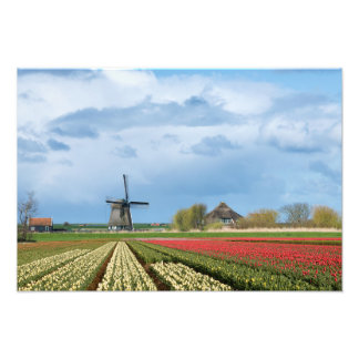 Windmill and tulips landscape photo print