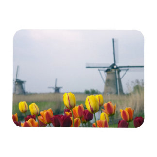 Windmills and tulips along the canal in magnet