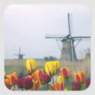 Windmills and tulips along the canal in square sticker
