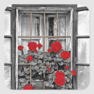 window-477937 window house black and white flowers square sticker