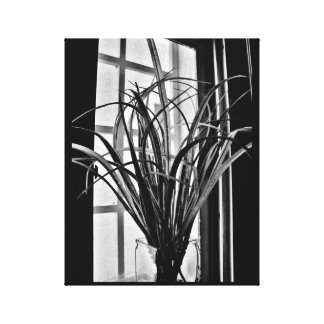 Window Plant View Canvas Print
