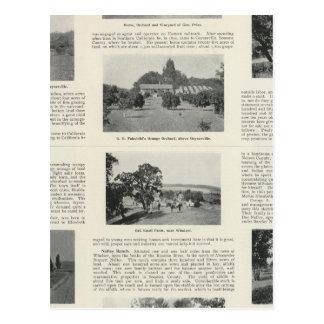 Windsor, California Postcard