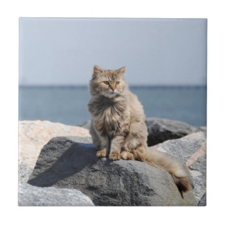 Windswept Cat at Seaside Tile