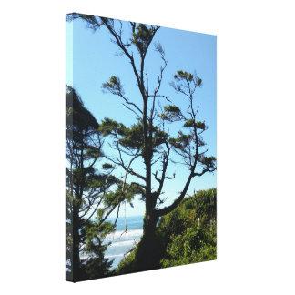 Windswept Coastal Washington View Stretched Canvas