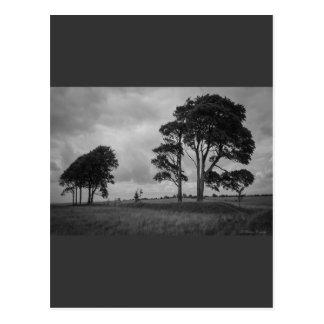 Windswept Trees Postcard