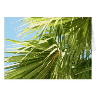 Windy Palm card