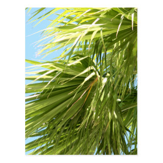 Windy Palm postcard