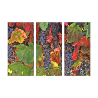 Wine Country Triptych 3 Panel Canvas Art Vineyard