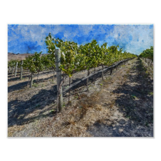 Wine Vineyard in Napa Valley Poster