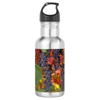 Wine Vineyard Water Bottle