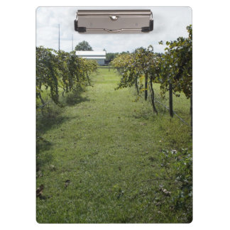 Winery Clipboards