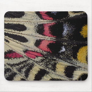 Wing underside close-up Bhutanitis mansfieldi Mouse Pad