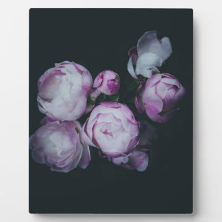 Wink Rose Buds dark background Plaque