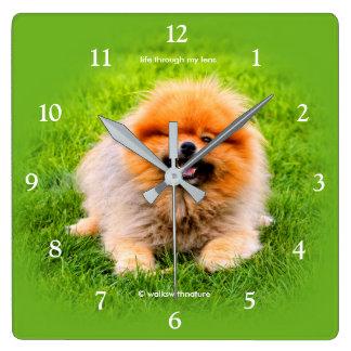 Winking Chuckling Funny Pomeranian Dog Square Wall Clock