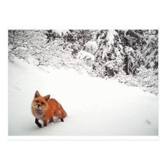 Winking Fox Postcard