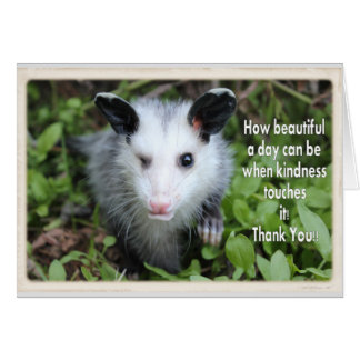Winking possum thank you card. card