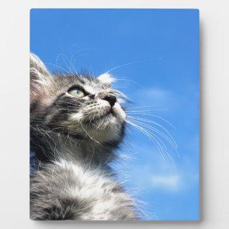 Winston the Tabby Aviator Cat Plaque