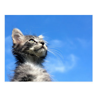 Winston the Tabby Aviator Cat Postcard