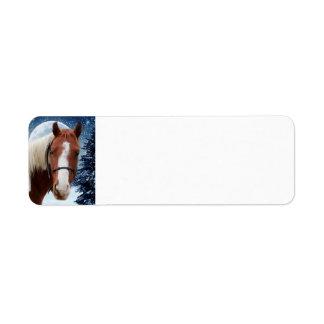 Winter American Paint Horse Return Address Label