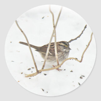Winter and the Sparrow Classic Round Sticker