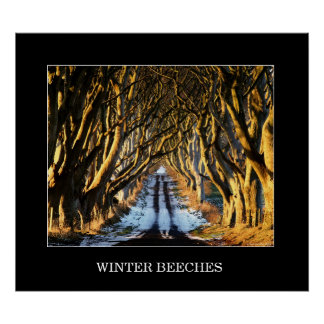 Winter Beeches Poster