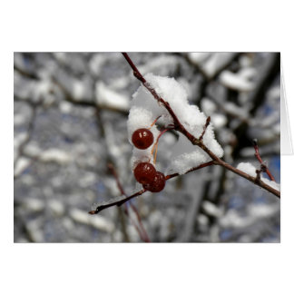 Winter Berries Card