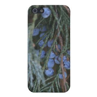 Winter Berries Iphone 4/4s Speck Case iPhone 5/5S Case