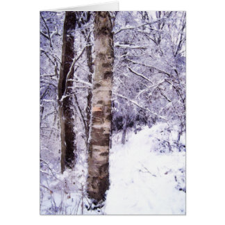 Winter Birch Tree Card