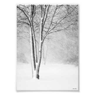 Winter Blizzard Snowy Tree White-Out Abstract Photo Print