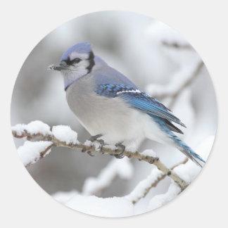 Winter Blue Jay Round Sticker
