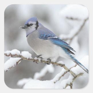 Winter Blue Jay Square Sticker