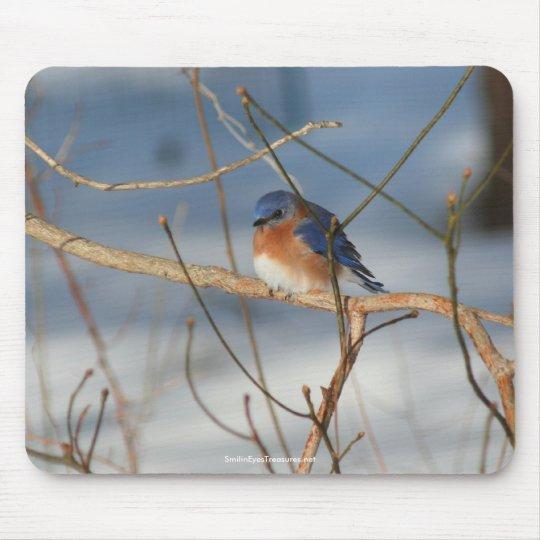 Winter Bluebird Wildlife Nature Photo Mousepad
