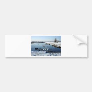 Winter boating lake scene with birds feeding. bumper sticker