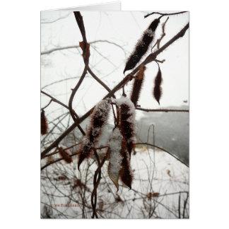 Winter Bristly Locust Card
