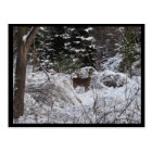 Winter Deer Postcard