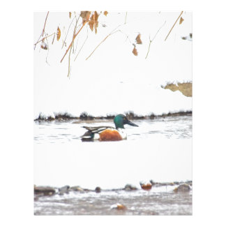 Winter Duck Letterhead
