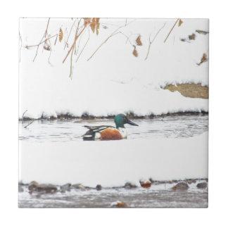 Winter Duck Tile