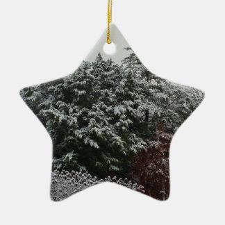 Winter Evergreen Ceramic Star Ornament