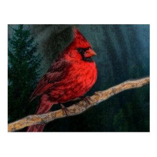 Winter Evergreen Primitive Christmas Red Cardinal Postcard