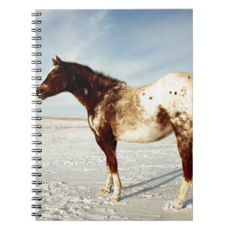 Winter Horse Notebook