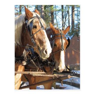 Winter Horses Sturbridge Village, Massachusetts Postcard