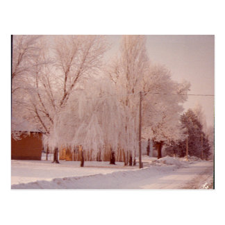 Winter Ice Postcard
