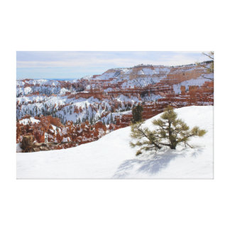 Winter in Bryce Canyon Canvas Print
