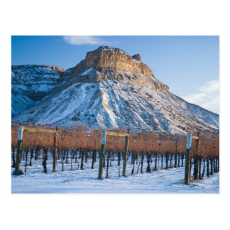 Winter in Colorado Wine Country Postcard