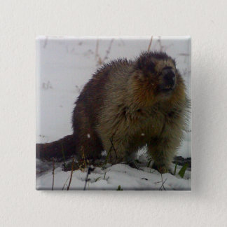 Winter Marmot 2 Inch Square Button
