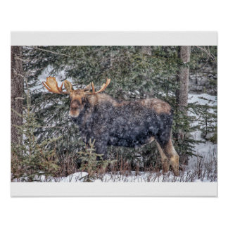 Winter Moose Poster