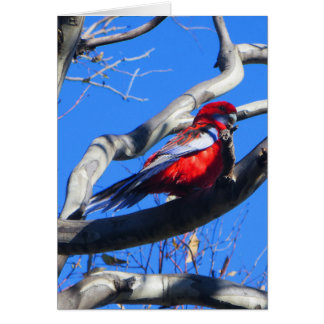 Winter Nature in Canberra Greeting Card