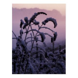 Winter, Norfolk, England - Postcard